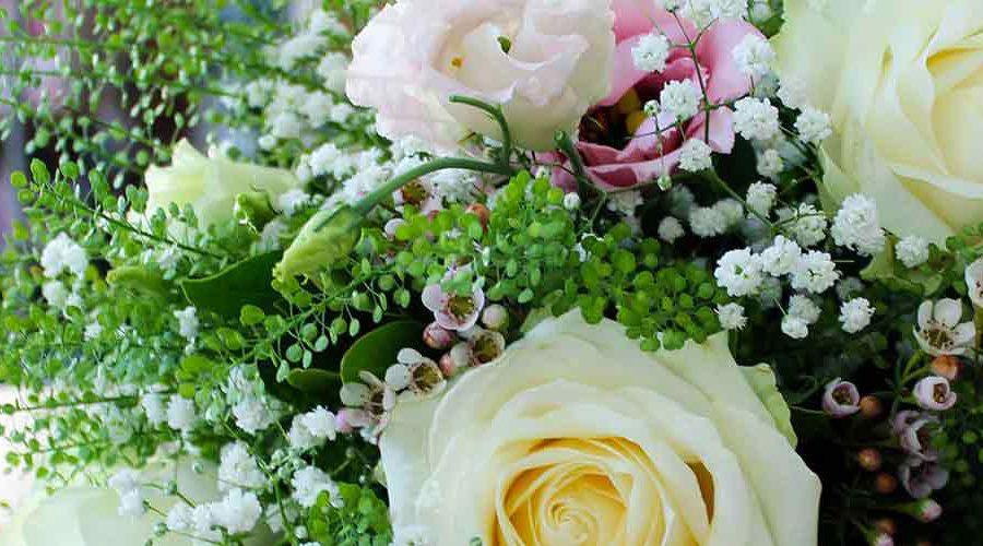 floraison-bg